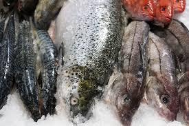 Peixos grassos